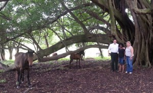 Environmental Affairs spokesperson John Cupido (MPL) with Veliswa Mvenya (MPL) and DA Shadow Minister for Agriculture, Annette Steyn, recently visited the Mkhulu Kei horse trail farm near Kei Mouth.